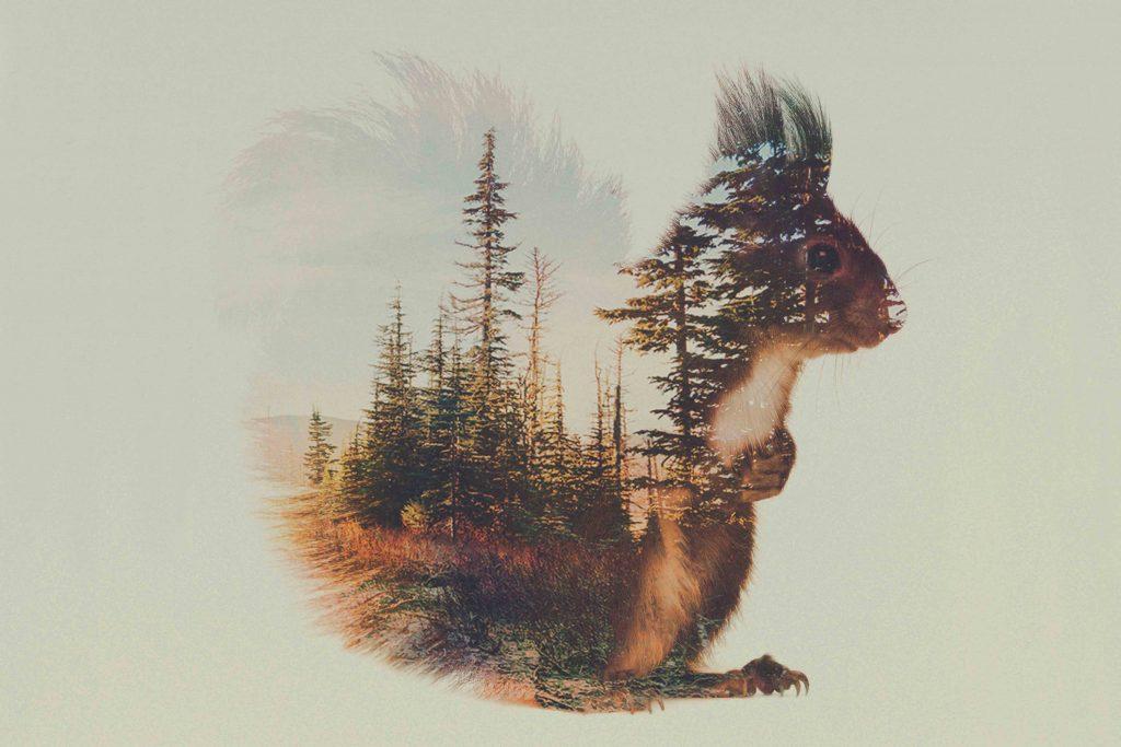 Tableau écureuil de l'artiste Andreas Lie