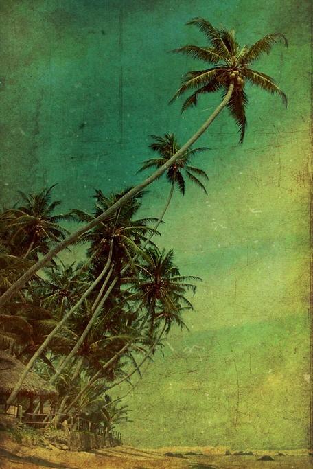 Tableau Palmier par Andrew Paranavitana